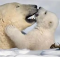 National Geographic Best Nature Photos 2009