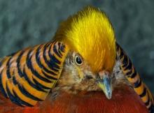 Bird Kingdom 2 Thomas Stirr