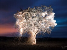 impermanent sculptures firework tree photography vitor schietti