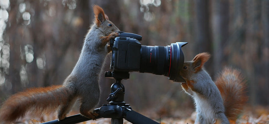Vadim Trunov squirrel taking photo of each other