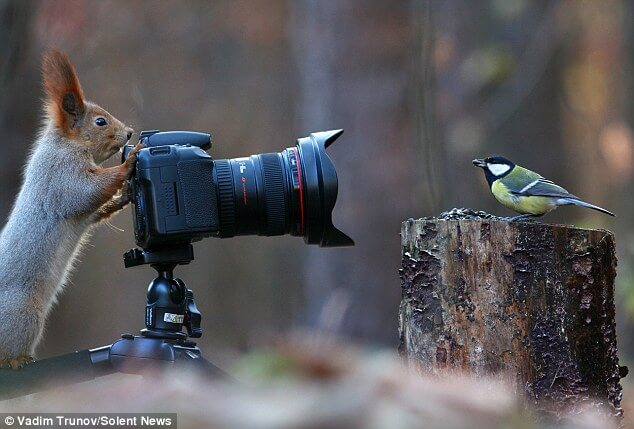 Vadim Trunov squirrel taking photo
