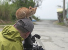 stray kitten with wildlife photographer Mitsuaki Iwago