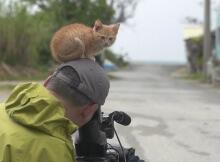 stray kitten with wildlife photographer Mitsuaki Iwago