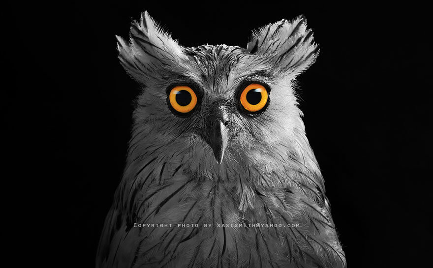 owl photography by Sasi-Smit