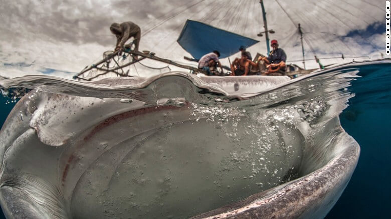 Adriana Basques whale shark