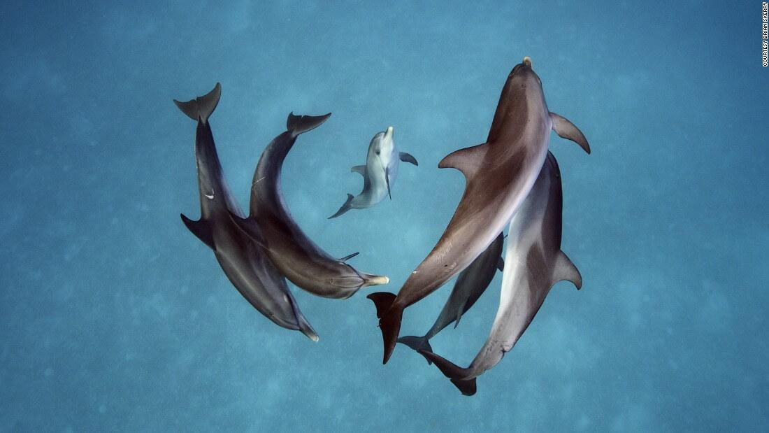 Underwater photographer Brian Skerry shark