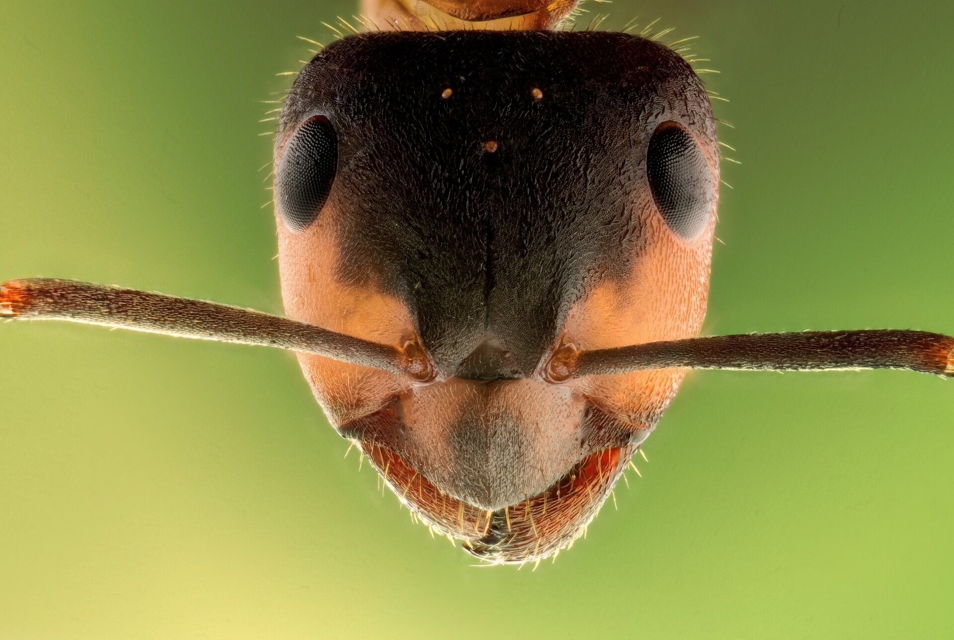 close up of ant's face