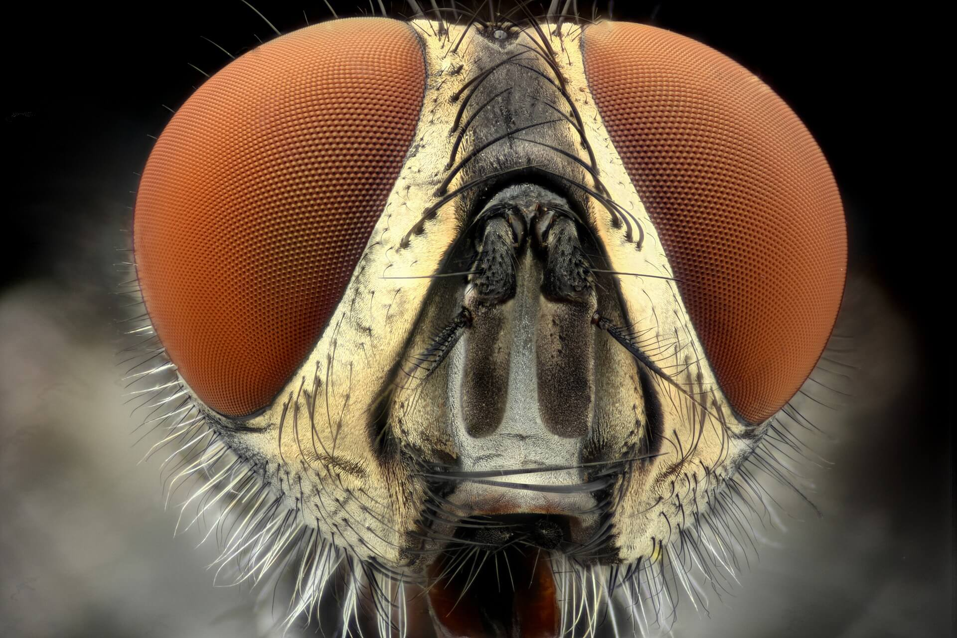 macro photography of bug's face